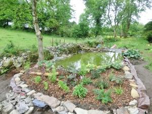 Bog garden planted up.