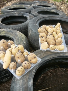 Potatoes and tyres