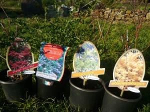 Elemental plants