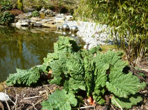 rhubarb and pond