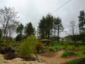 woodland before