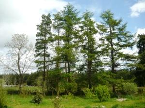 woodland 026