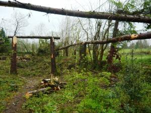 woodland 036
