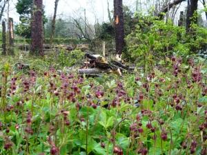 woodland 043