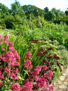 circle june red valerian