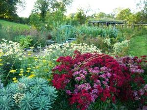 garden july flowers