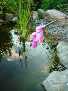 garden july angel