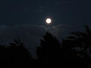 garden moon