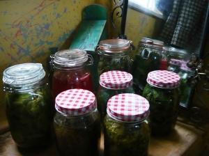 herbs 063