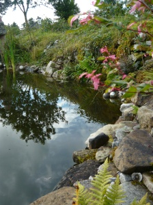 pond wall