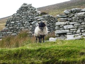 Achill island baaa