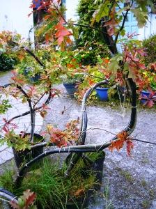 bonsai 022