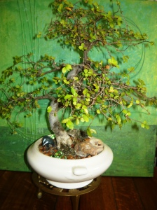 bonsai and pollination 010