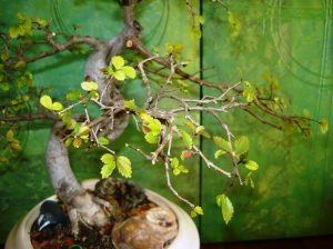 bonsai and pollination 015