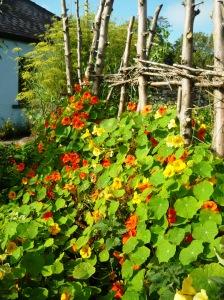 september garden 012