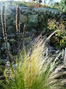 september garden pony tail grass