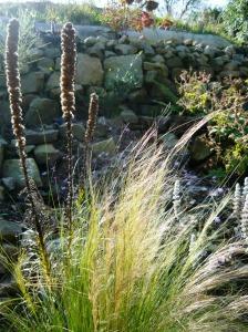 september garden pony tail grass