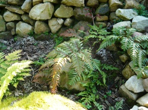 september garden ferns