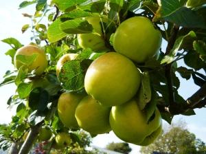 wildlife september apples