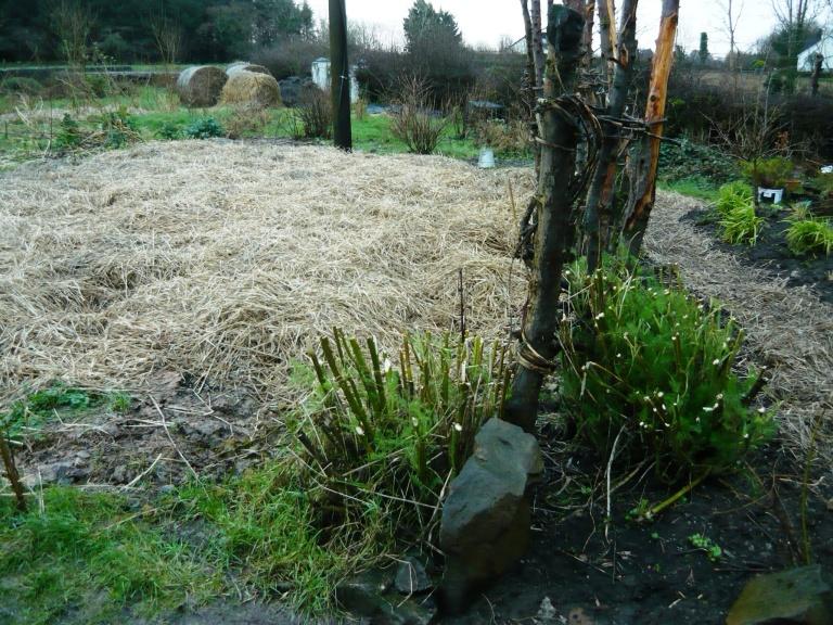 straw bed 007