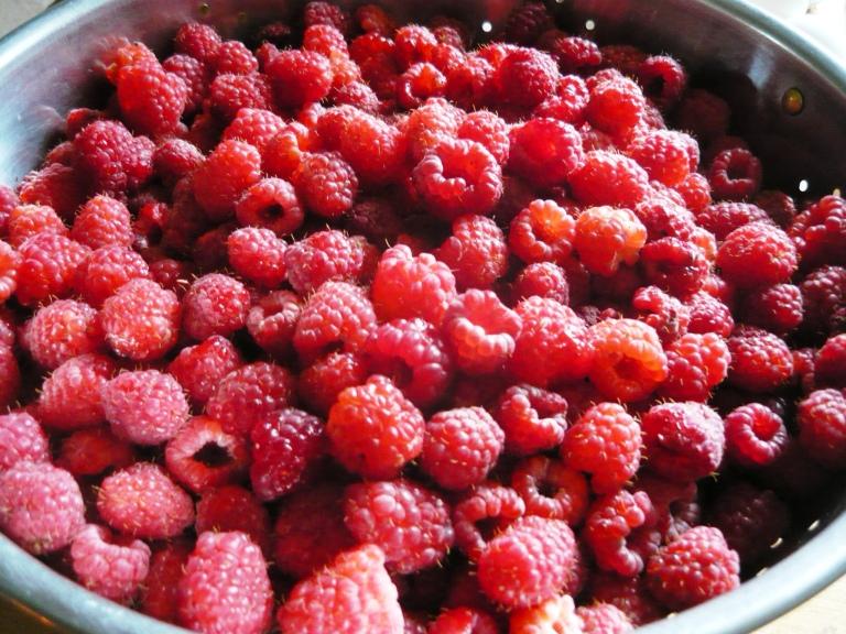 raspberries 033