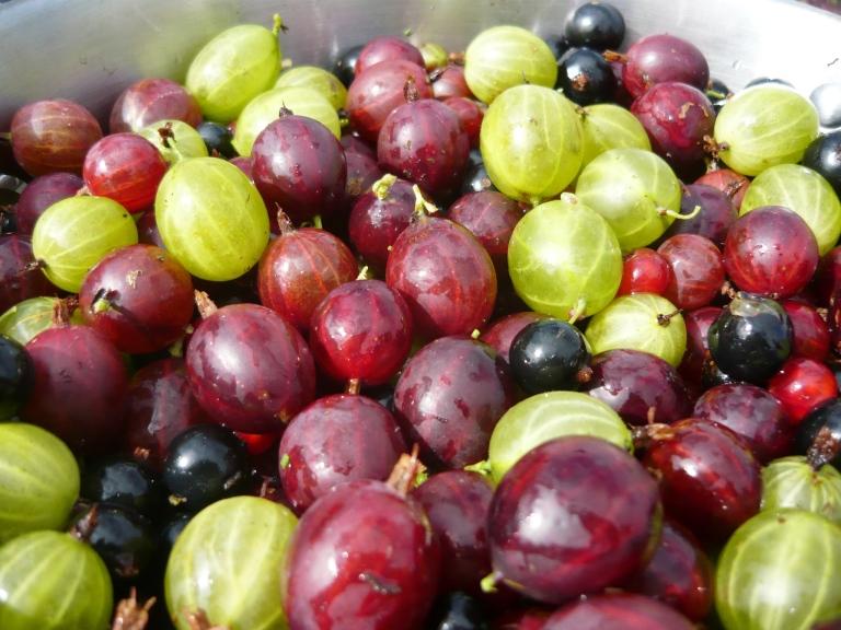 berries 004