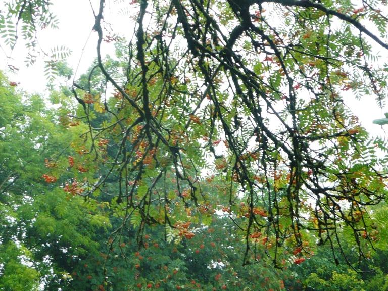 fruit trees 034