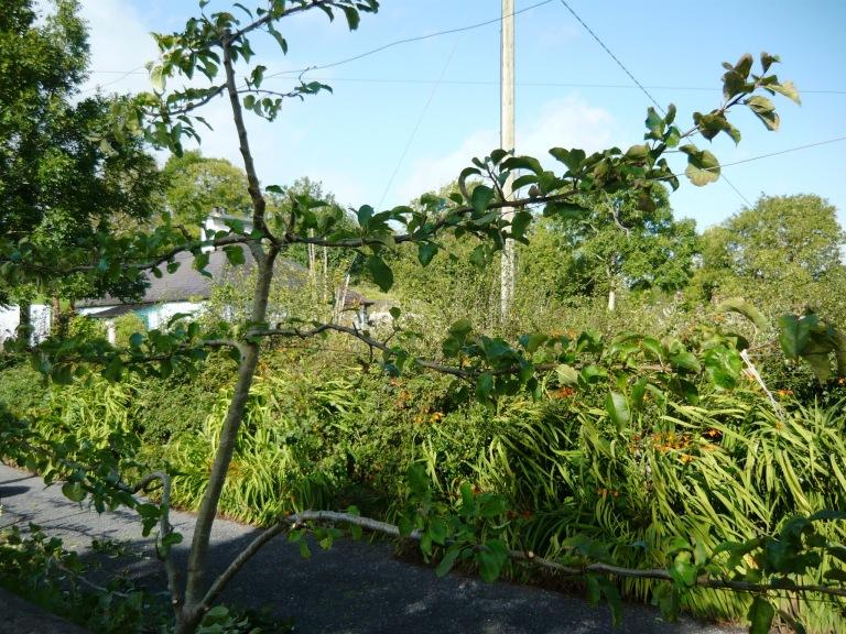 september-garden-054