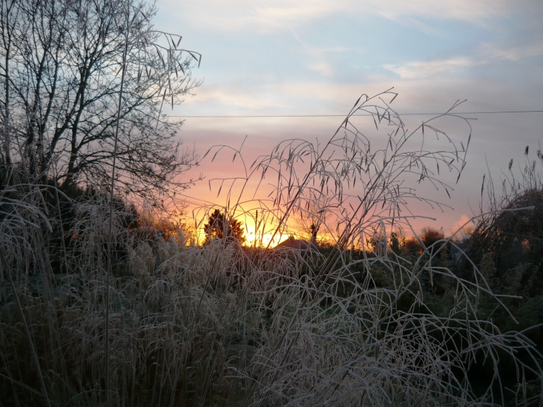 frosty-morning-052