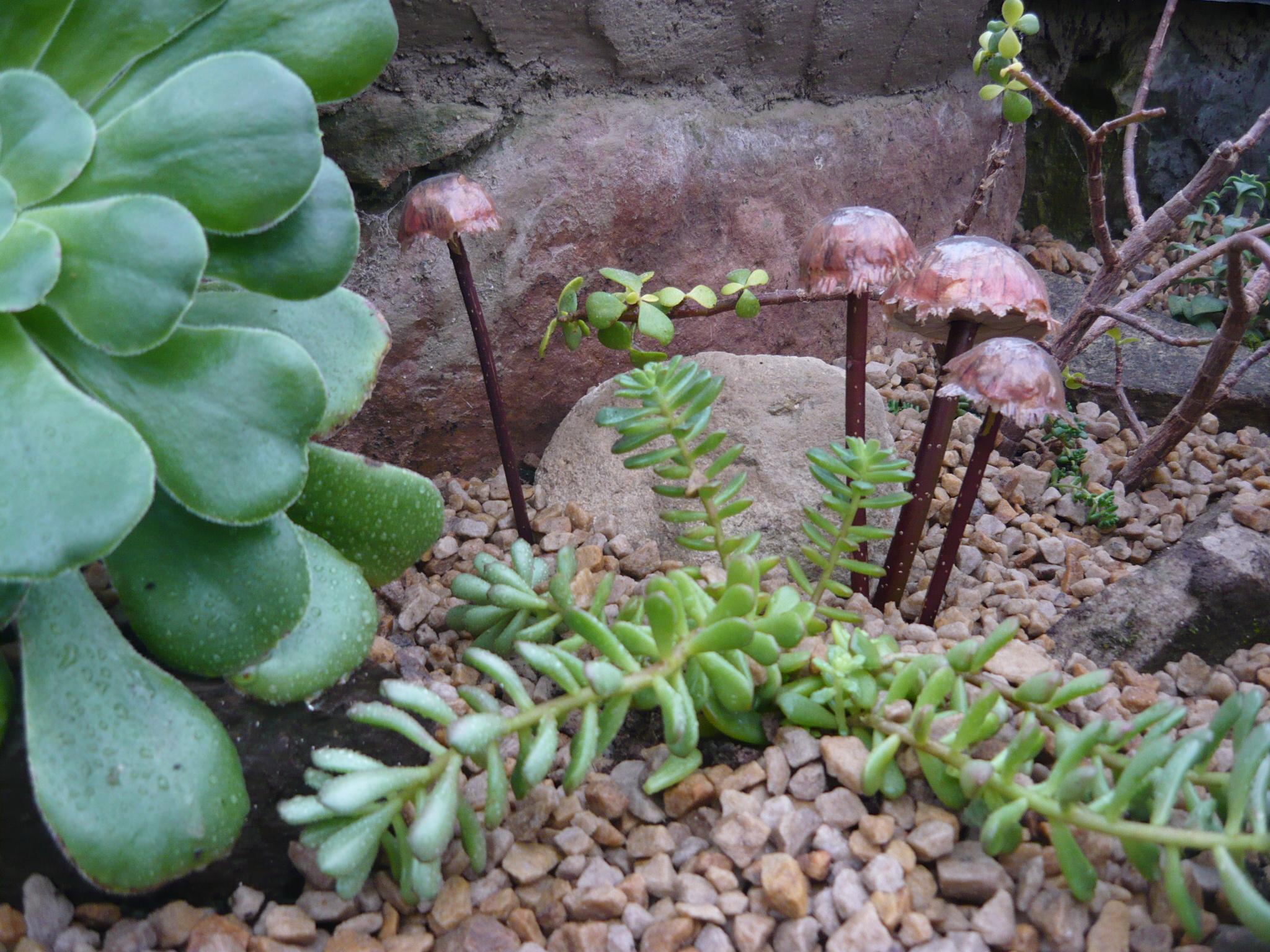 succulents-032