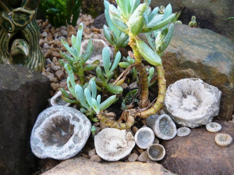 succulents-060