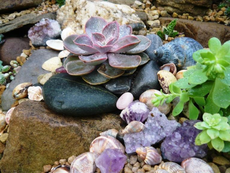 succulents-061