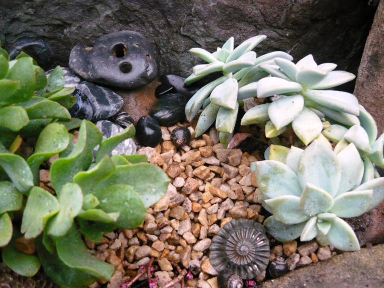 succulents-078