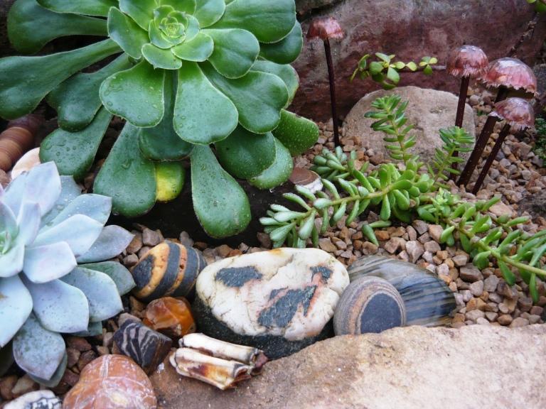 succulents-079