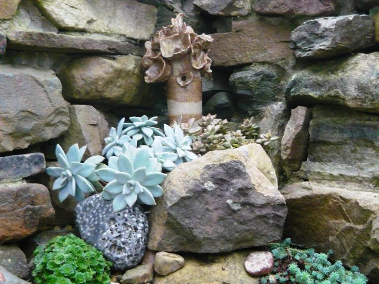 succulents-082