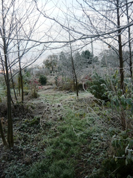 frosty morning 091