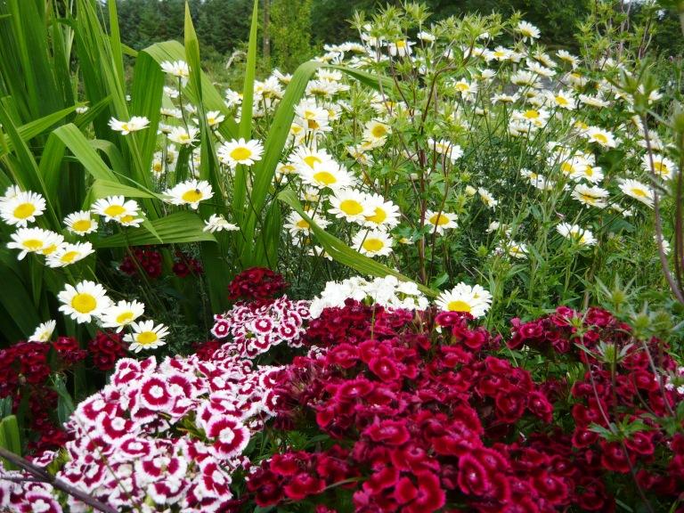 garden-july-063