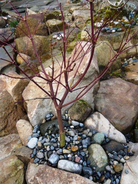 bonsai february 009