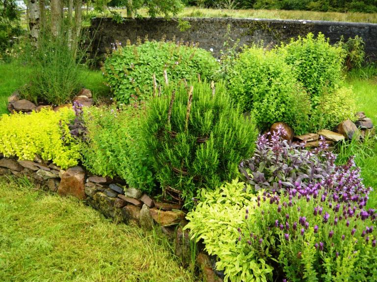 herbs 021