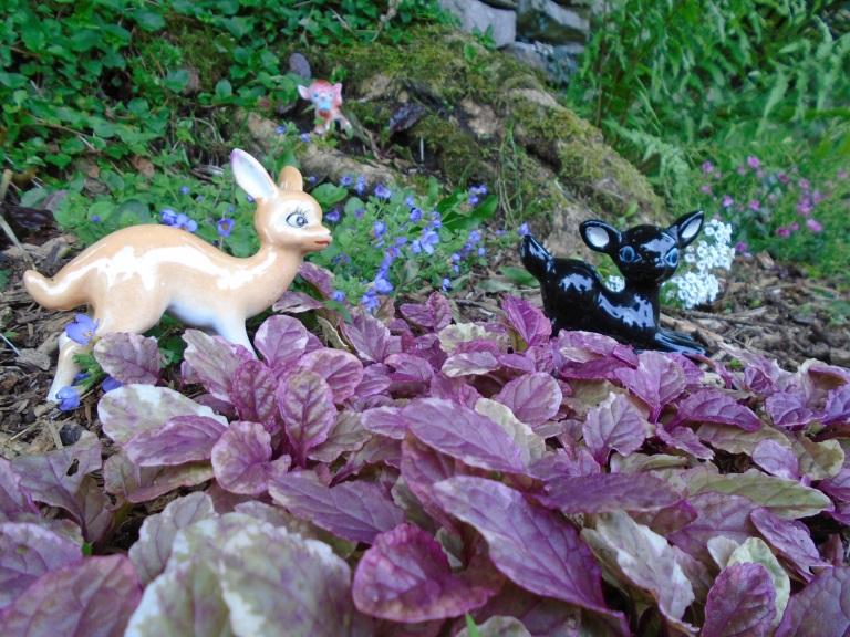 garden july 024