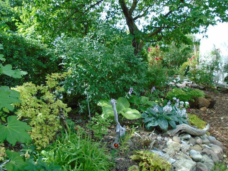 sweden and garden 062