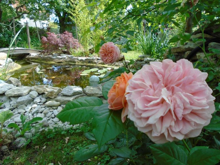 sweden and garden 073