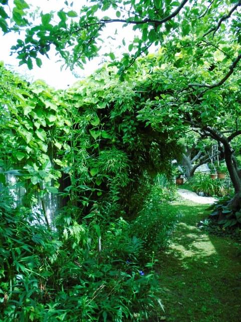 sweden and garden 083