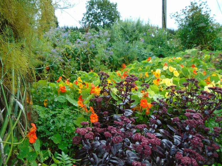 sweden and garden 218
