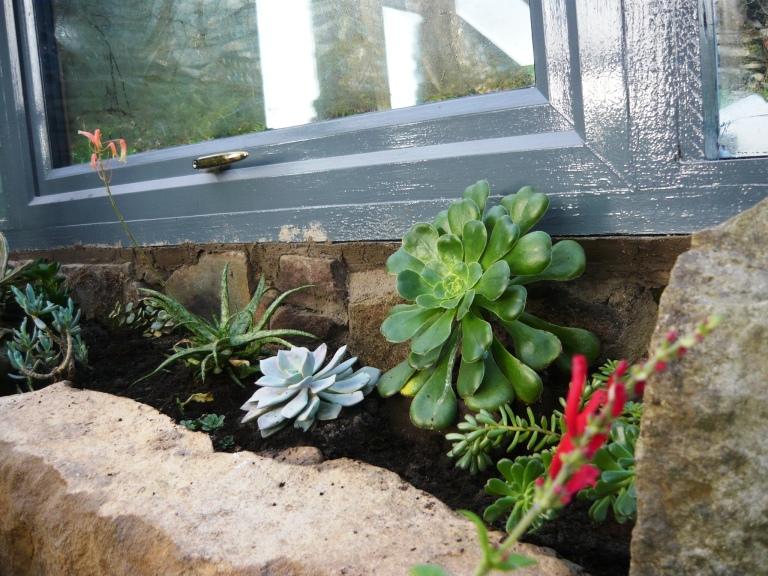 succulents 020