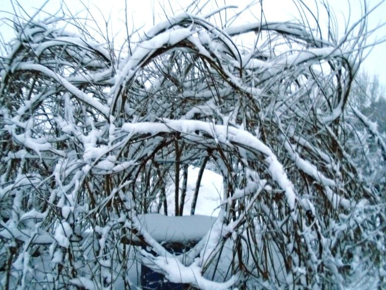 snow 022