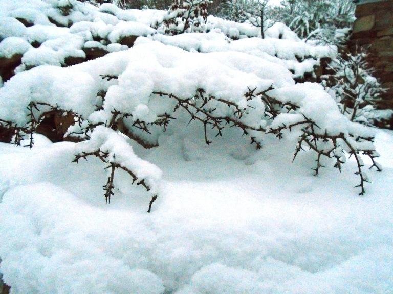 snow 079