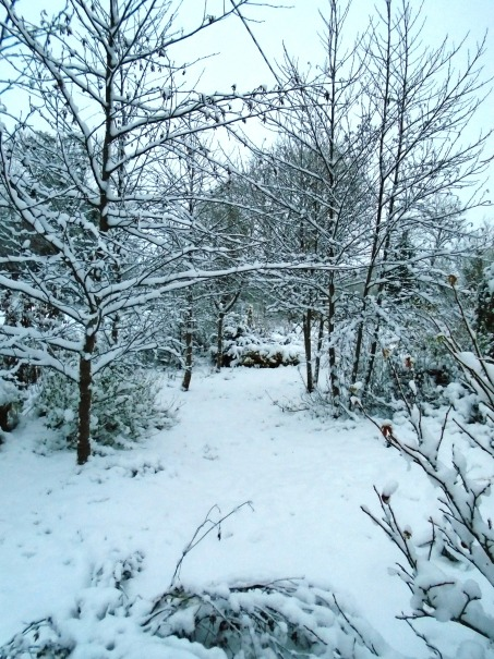 snow 104