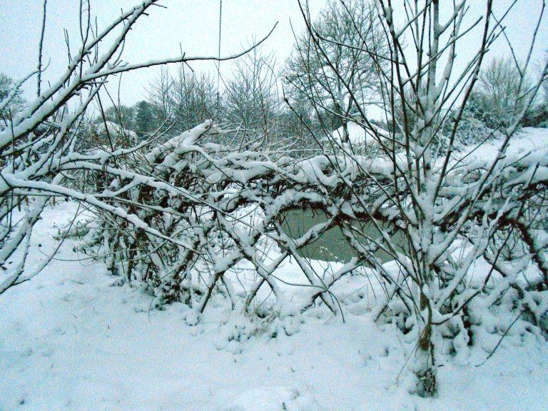 snow 118