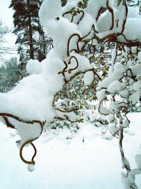 snow 130